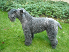Kerry blue terrier kutya